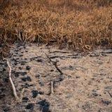 Hierba seca en el pantano Imágenes de archivo libres de regalías