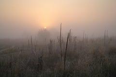Hierba seca en el prado cerca del bosque cubierto Fotografía de archivo libre de regalías