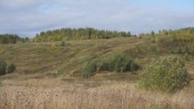 Hierba seca en el prado Otoño hermoso