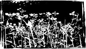 Hierba seca en fondo negro Foto de archivo libre de regalías
