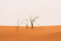 Hierba seca en la arena Fotos de archivo libres de regalías