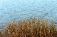 Hierba seca en la charca Imagen de archivo libre de regalías