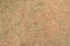Hierba seca en la tierra Fotos de archivo