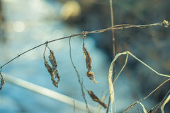 Hierba seca en primavera temprana en un día soleado Foto de archivo libre de regalías