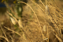Hierba seca en un campo Imagenes de archivo