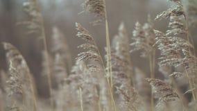 Hierba seca en viento del cielo almacen de metraje de vídeo