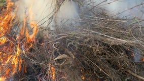 Hierba seca o heno ardiendo que est?n fumando El problema de fuegos y protecci?n de la naturaleza almacen de video