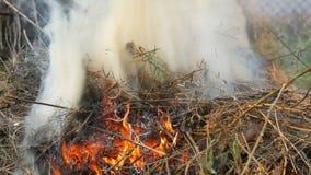 Hierba seca o heno ardiendo que est?n fumando El problema de fuegos y protecci?n de la naturaleza metrajes
