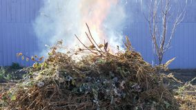 Hierba seca, ramas y basura ardiendo en jardín en día caliente del otoño Fuego, llama, humo almacen de metraje de vídeo