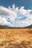 Hierba seca y montañas en el fondo Imagen de archivo libre de regalías