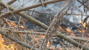 Hierba seca y ramas ardiendo cercanas encima de la visión Fuego salvaje peligroso en la naturaleza almacen de metraje de vídeo