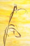 Hierba secada Imagen de archivo libre de regalías