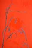 Hierba secada sobre el vidrio Fotografía de archivo libre de regalías