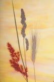 Hierba secada sobre el vidrio Imágenes de archivo libres de regalías