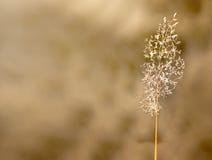 Hierba sola del otoño Imagenes de archivo