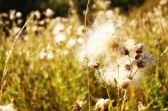 Hierba soleada en el campo fotografía de archivo libre de regalías