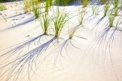 Hierba soplada viento en la duna de arena Fotografía de archivo libre de regalías