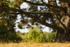 Hierba, tronco de árbol fotos de archivo libres de regalías