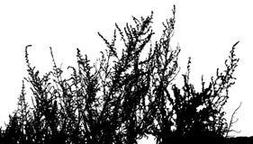 Hierba, vector de la planta stock de ilustración
