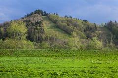 Hierba verde, árboles y montaña Foto de archivo libre de regalías