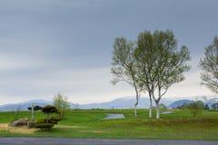 Hierba verde, árboles y montaña Imagenes de archivo