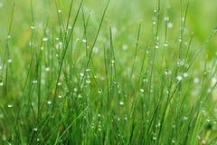 Hierba verde Fotografía de archivo libre de regalías