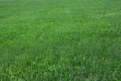 Hierba verde. Imagen de archivo libre de regalías