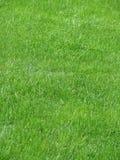 Hierba verde 2 Imagenes de archivo