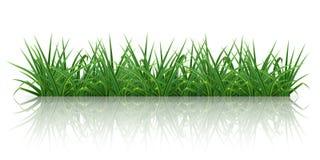 Hierba verde stock de ilustración