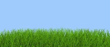 Hierba verde ilustración del vector