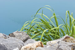 Hierba verde 003 Fotografía de archivo libre de regalías