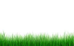 Hierba verde libre illustration