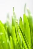 Hierba verde Imagen de archivo