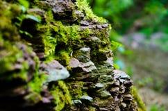 Hierba verde Imagen de archivo libre de regalías
