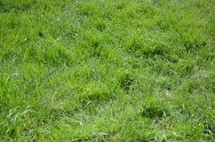 hierba verde 1 Foto de archivo
