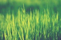 Hierba verde Imágenes de archivo libres de regalías