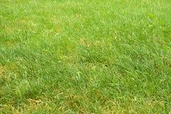 Hierba verde abstracta Imagenes de archivo
