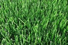 Hierba verde acortada Fotos de archivo