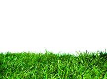 Hierba verde aislada Imágenes de archivo libres de regalías