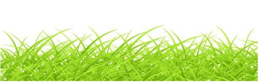 Hierba verde aislada ilustración del vector
