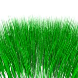 Hierba verde aislada en blanco Fotos de archivo