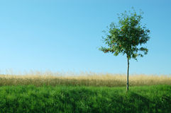 Hierba verde, amarilla, árbol, el cielo azul Imagen de archivo libre de regalías