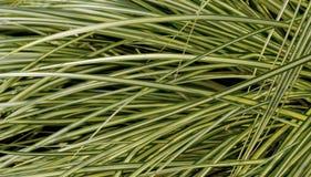 Hierba verde amarilla Imagen de archivo libre de regalías