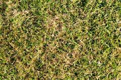 hierba Verde-amarilla Imagen de archivo libre de regalías