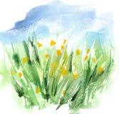 Hierba verde amistosa orgánica de Eco de la acuarela y campo de flores amarillo con el cielo azul Fondo del vector Fotografía de archivo