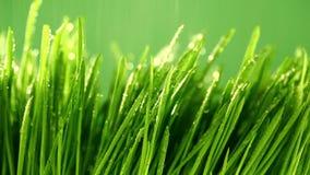 Hierba verde bajo la lluvia almacen de video