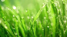 Hierba verde bajo la lluvia almacen de metraje de vídeo