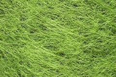 Hierba verde biselada Fotografía de archivo