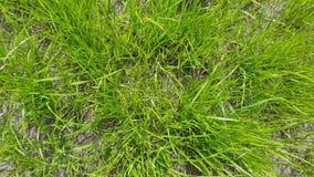 Hierba verde almacen de metraje de vídeo