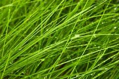 Hierba verde clara con las gotas del agua Fotos de archivo libres de regalías